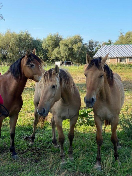 camping-la-molliere-chevaux